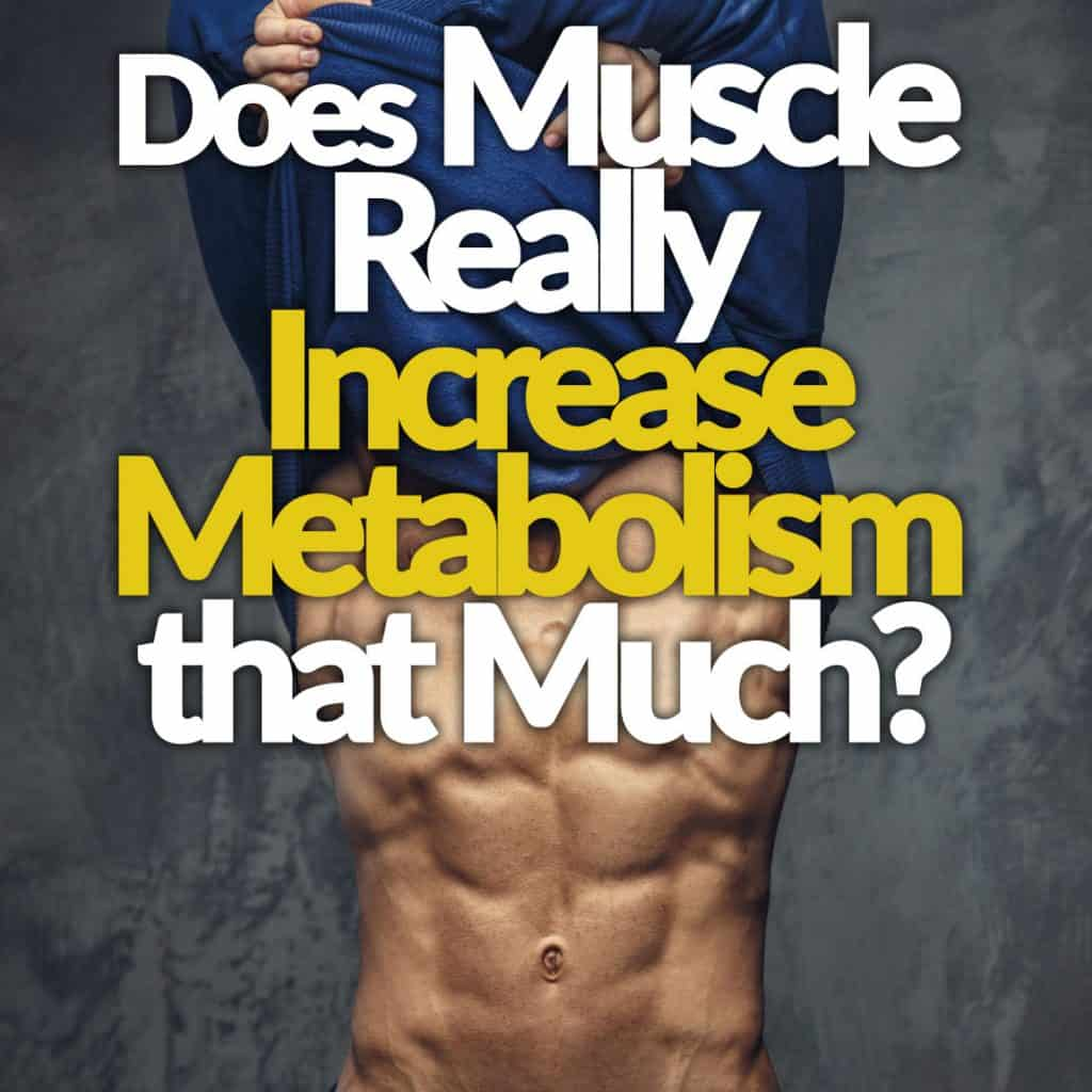 Does Muscle Really Increase Metabolism That Much