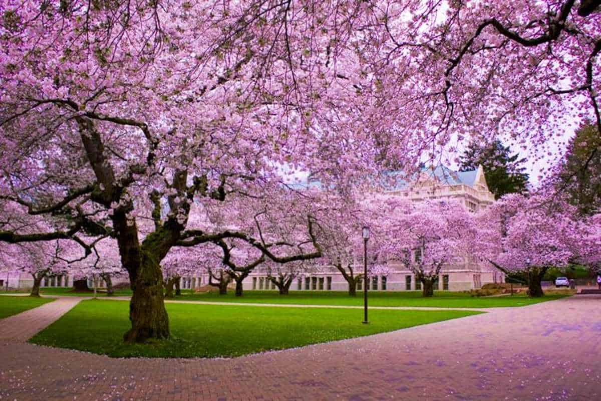 university of washington spring