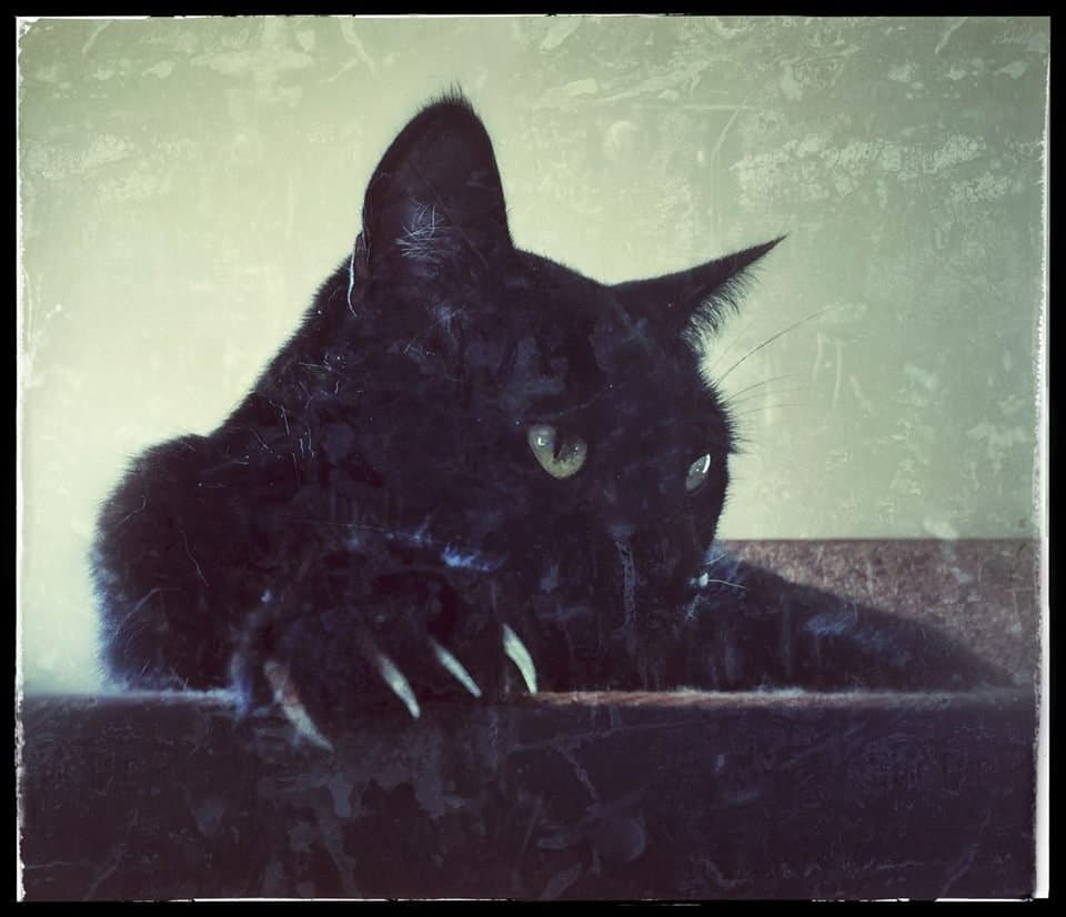 my cat violet